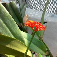 サンゴアブラギリ03.20.