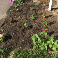 花壇のニューフェイス