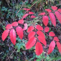 紅葉と赤い実探し