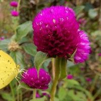 秋の熊山英国庭園・・・②