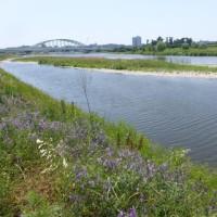 また見慣れない花が…多摩川夏景色シリーズ