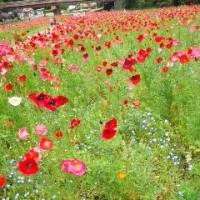 横須賀くりはま花の国