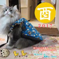 新年のご挨拶を申し上げます。