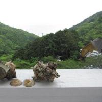 熱川の夜明け 魚主体の朝飯(予約投稿)