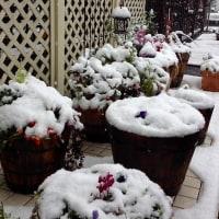 雪が、、、