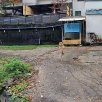 プーさん 長野県松本市奈川 奈川温泉 富喜の湯に行ったんだよおおう その7