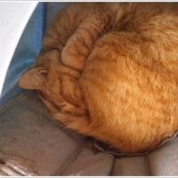 三寒四温のモフ猫