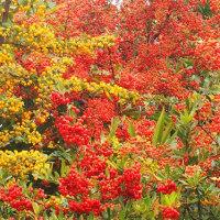 景色は少しずつ秋色になって