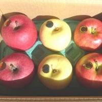 2/1(水)リンゴ届く