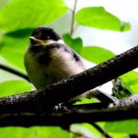 森は野鳥の子育て真っ最中。