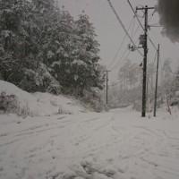 今朝も雪が