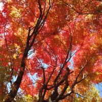 紅葉の伽藍(がらん)