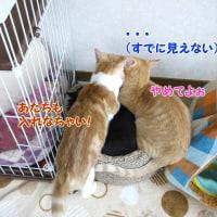ショータの災難~猫の懐はデカイ~