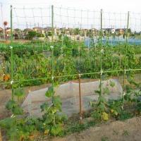 日記(6.20)黒豆植え