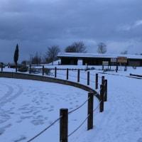 ●1月の大乗寺丘陵公園 雪