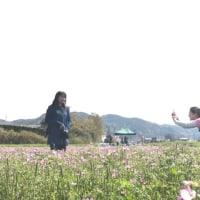 れんげ祭り💐