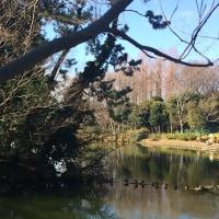 冷たい風吹く池