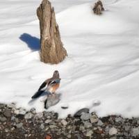 静かな自然湖にまさかの鳥が…