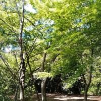 ぼたん桜&清水公園。