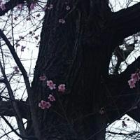 いちょうの木に…