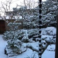 やはり、、雪に