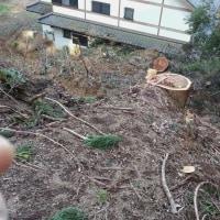 自然災害を軽微に!信頼できる屋敷林、防風林