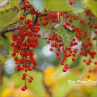 色合い豊かな秋♪