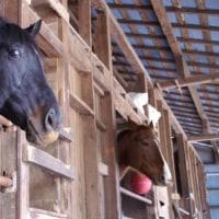 人と馬の絆が演じるドレッサージュ