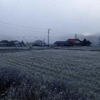 大霜の大伴