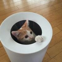 年末年始の猫のペットホテルの予約状況(その2)
