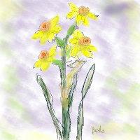 ☆スイセンの花の咲く庭