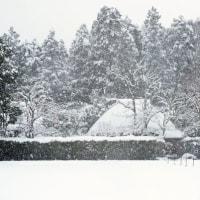 冬の風物詩 (落柿舎)