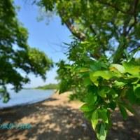 新緑の琵琶湖湖岸