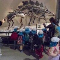 そら組 国立科学博物館コレクション