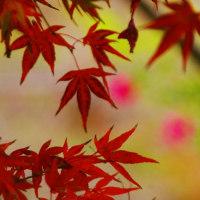 紅葉in京都市