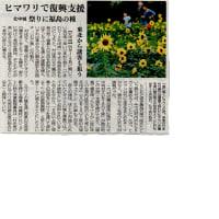 日本一早いひまわり祭り ひまわりを通じた復興支援