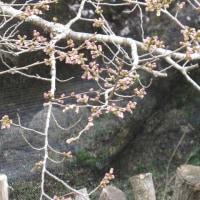 「春のぬくもりの光景」