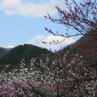 Nagano/ Nagano Trip ( 3 ) ( 長野旅行)