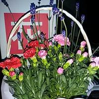 はやばやの「母の日の花」