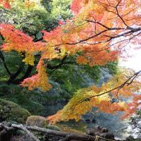 秋の新宿御苑!