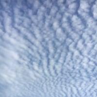 昨日は綺麗な鱗雲が見えました。