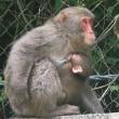 国道41号でお猿さん発見