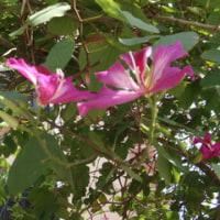 バンランの花3