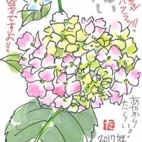 6月4日 浜っ子絵手紙15周年展