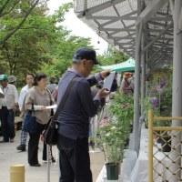 広島:花鳥風月>広島市植物公園~①バラ園&②クレマチス展へご案内!