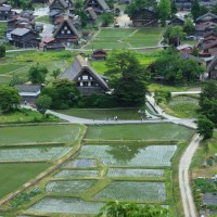 ●初夏の白川郷 合掌造り集落 水田   カエル