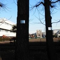 志村坂下・蓮根町 ⑮ スダジイで「こころ旅」で火野正平で山手線か?山の手線か?で占領軍の影が!