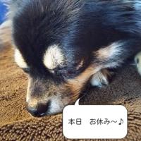 ちーちゃん からです U。・x・)ノ ゚.+:。ちワン!