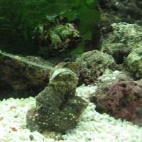 海水NO.97『オオヘビガイ』 中身は普通