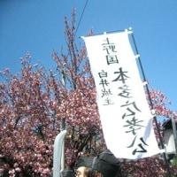 白井宿八重桜祭り見物 H-29- 4-23